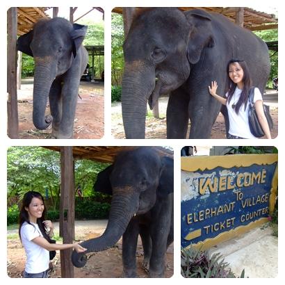 BKK Elephant Village