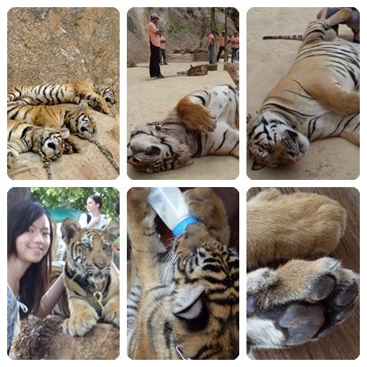 BKK Tiger Temple 3