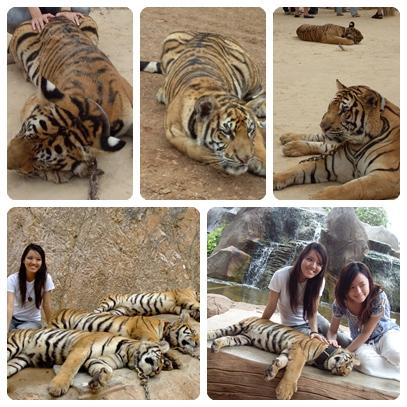 BKK tiger temple 4