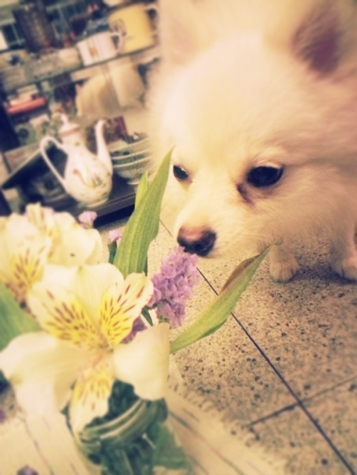 simba smelling the flowers