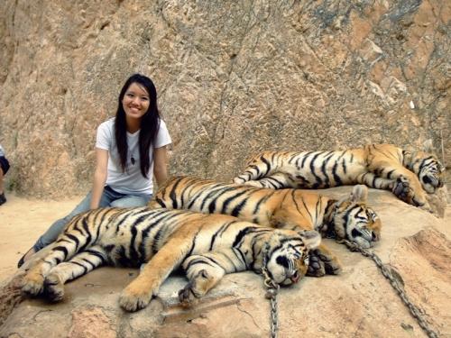 thai tigers