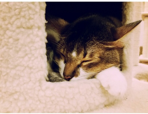 the cat cafe 11