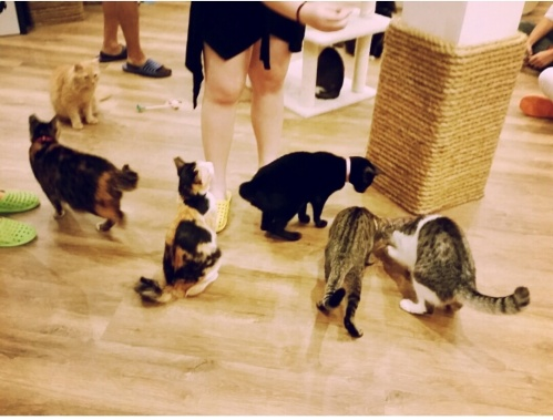 the cat cafe 12