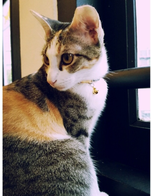 the cat cafe 15