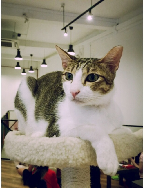 the cat cafe 16