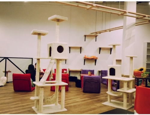 the cat cafe 2